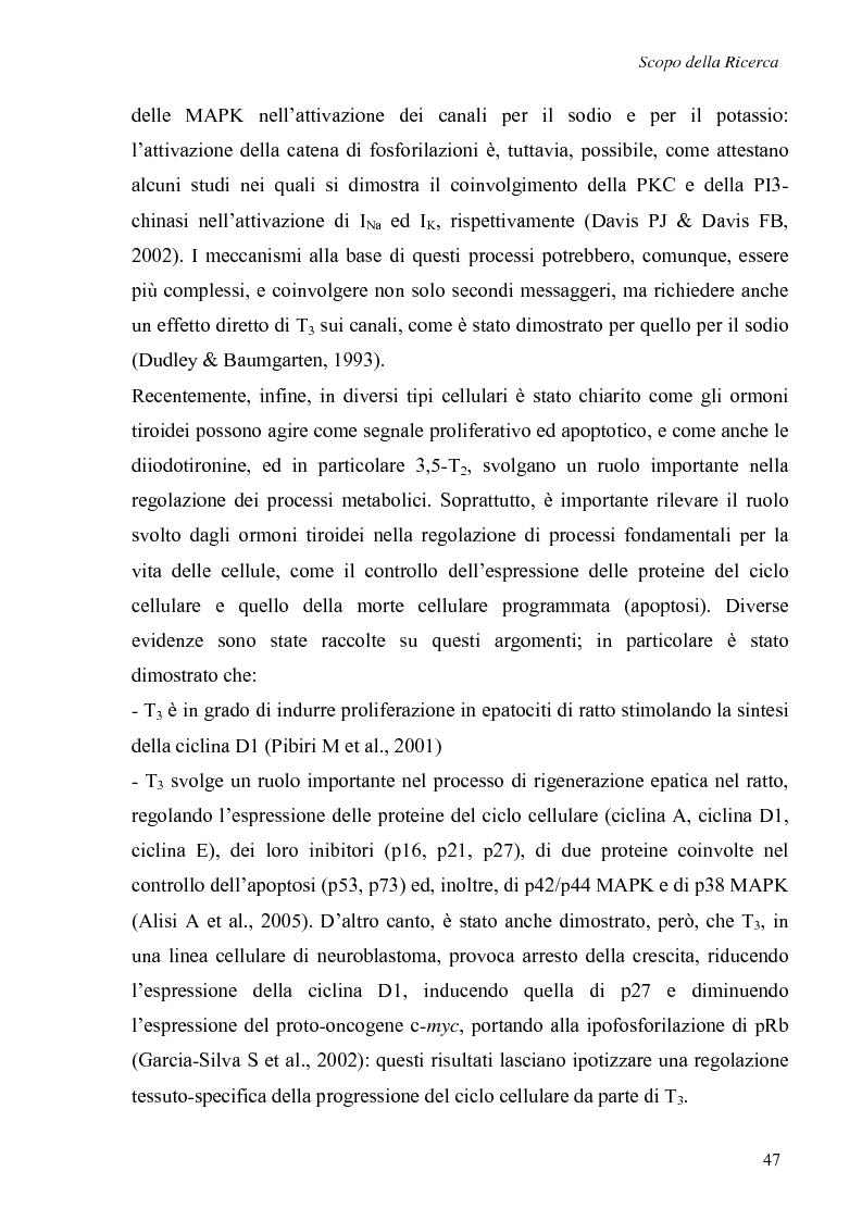 Anteprima della tesi: Effetti non genomici degli ormoni tiroidei in epatociti durante lo sviluppo embrionale, Pagina 2