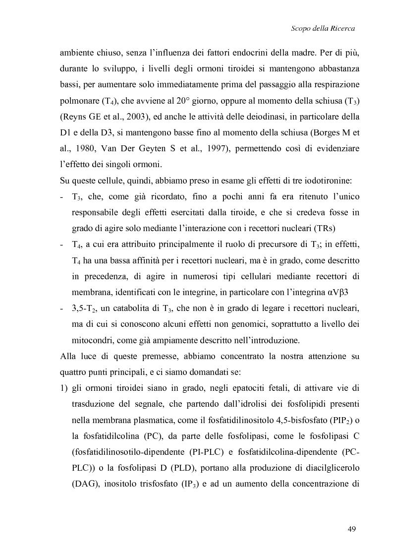 Anteprima della tesi: Effetti non genomici degli ormoni tiroidei in epatociti durante lo sviluppo embrionale, Pagina 4