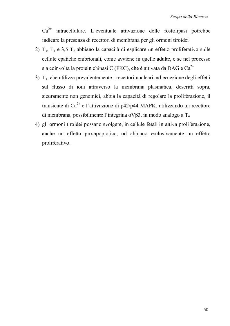 Anteprima della tesi: Effetti non genomici degli ormoni tiroidei in epatociti durante lo sviluppo embrionale, Pagina 5