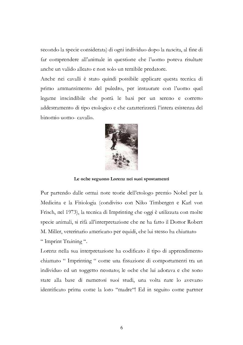 Anteprima della tesi: Imprint Training ed esperienze di addestramento dei puledri presso il Centro Militare Veterinario, Pagina 5