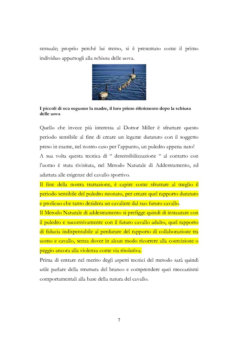 Anteprima della tesi: Imprint Training ed esperienze di addestramento dei puledri presso il Centro Militare Veterinario, Pagina 6