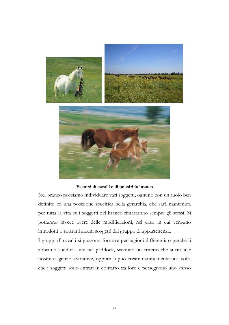 Anteprima della tesi: Imprint Training ed esperienze di addestramento dei puledri presso il Centro Militare Veterinario, Pagina 8