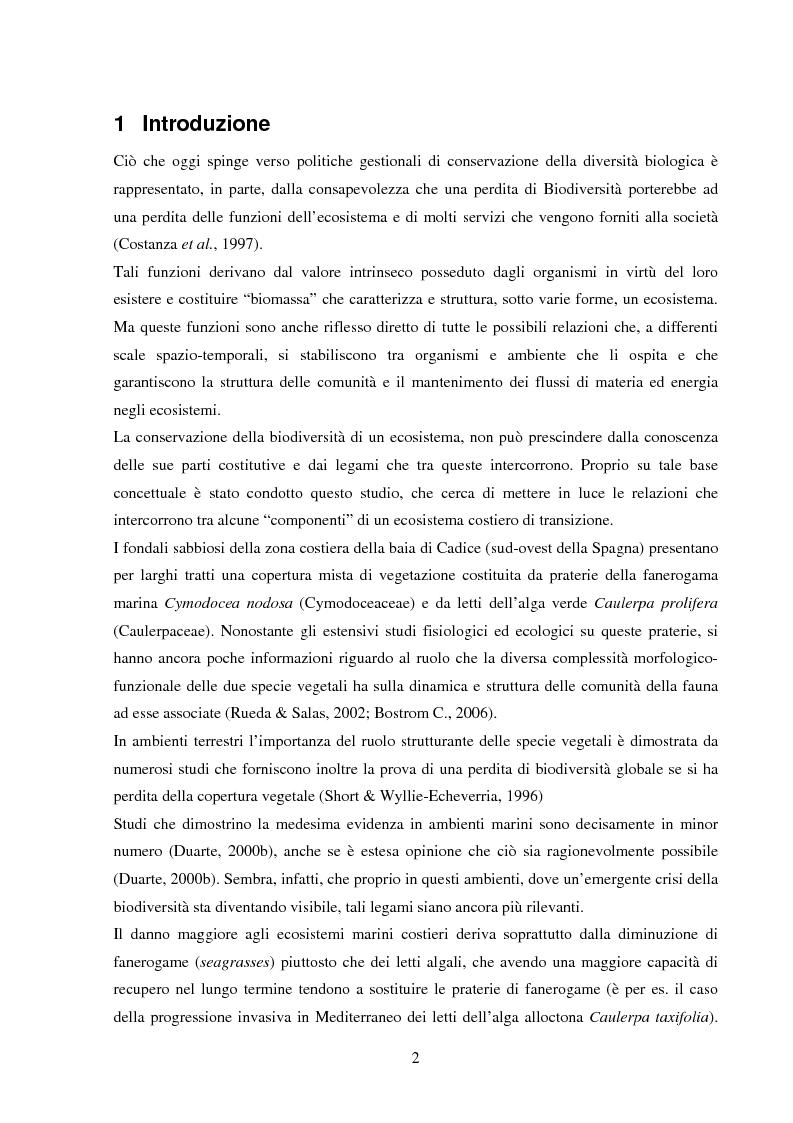 Anteprima della tesi: Struttura di popolamenti meiobentonici associati a differenti coperture vegetali: Caulerpa prolifera/Cymodocea nodosa (Baia di Cadice, Spagna), Pagina 1