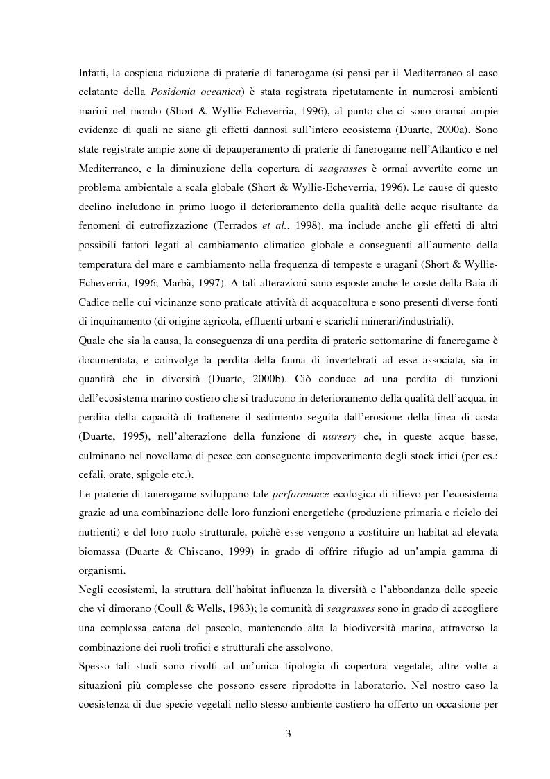 Anteprima della tesi: Struttura di popolamenti meiobentonici associati a differenti coperture vegetali: Caulerpa prolifera/Cymodocea nodosa (Baia di Cadice, Spagna), Pagina 2