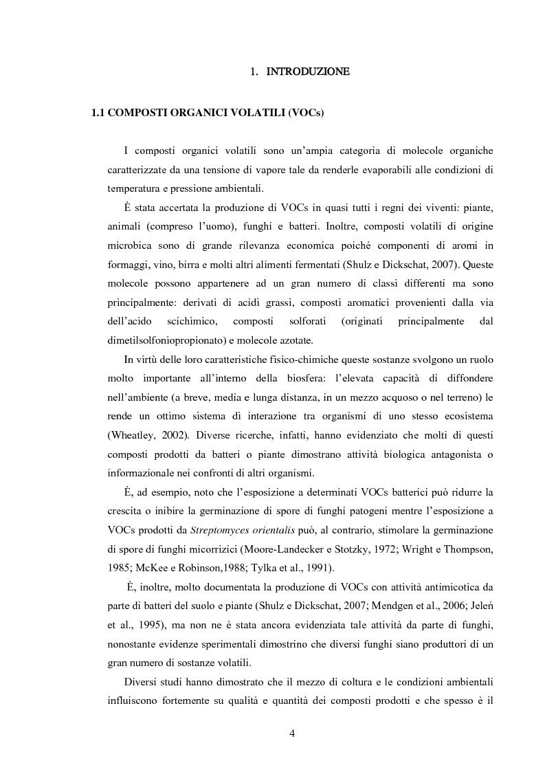 Anteprima della tesi: Composti organici volatili come meccanismo di antagonismo a lunga distanza in Fusarium oxysporum, Pagina 1
