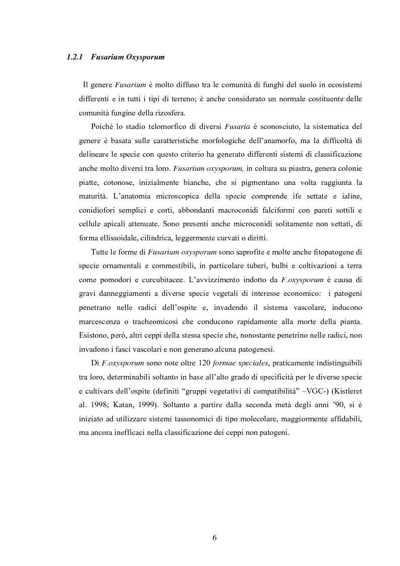 Anteprima della tesi: Composti organici volatili come meccanismo di antagonismo a lunga distanza in Fusarium oxysporum, Pagina 3