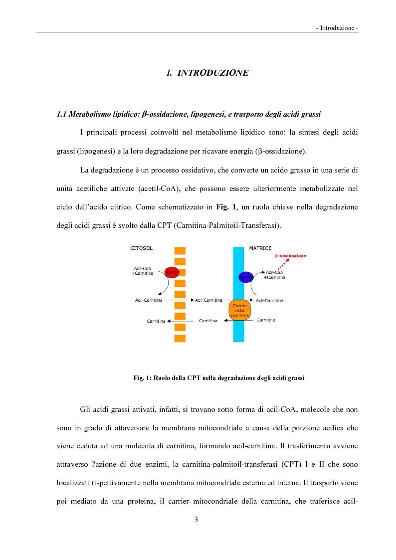 Anteprima della tesi: Acidi linoleici coniugati (CLA) e regolazione del metabolismo lipidico, Pagina 1