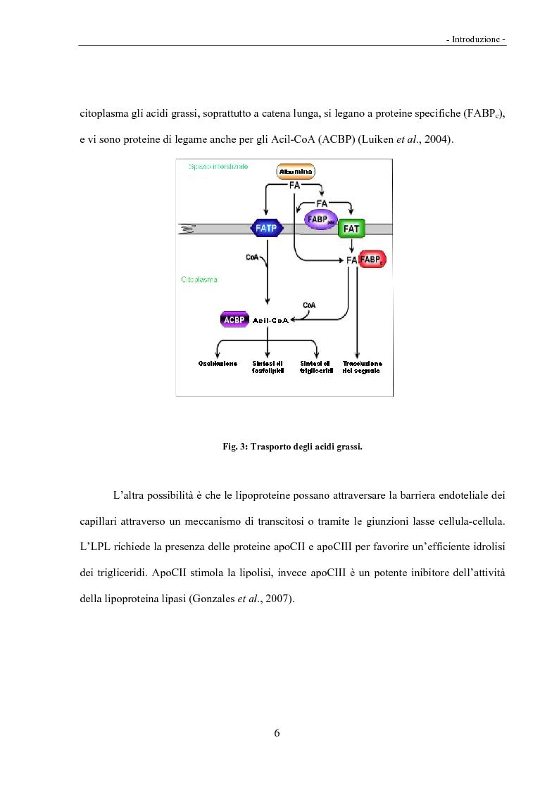 Anteprima della tesi: Acidi linoleici coniugati (CLA) e regolazione del metabolismo lipidico, Pagina 4