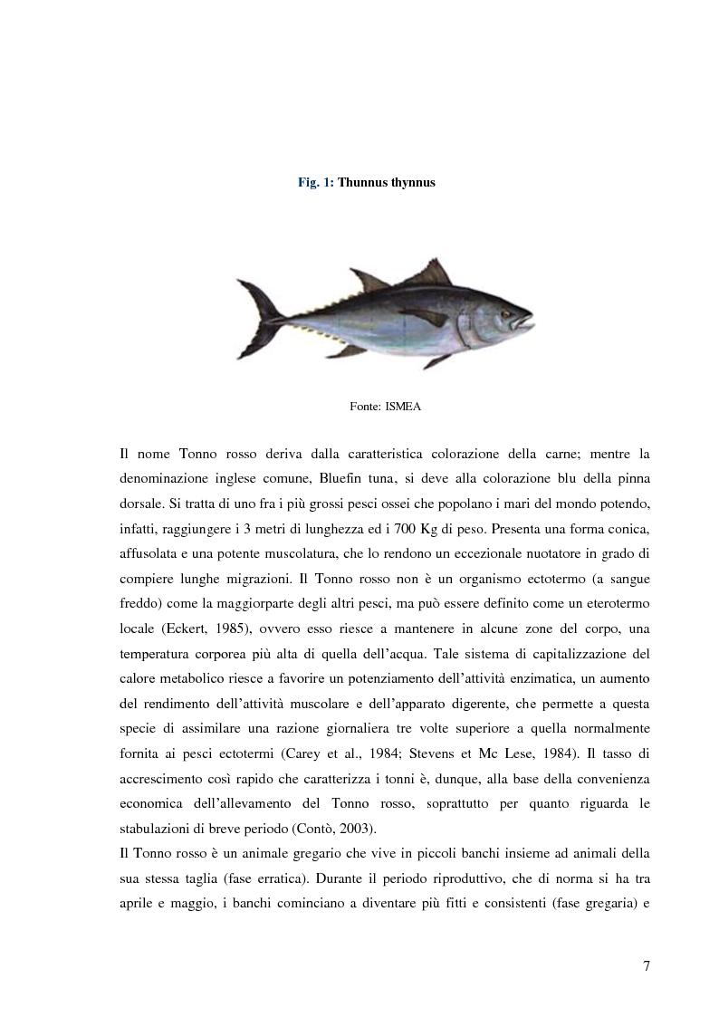 Anteprima della tesi: Pesca e allevamento del tonno rosso: analisi economica della maricoltura, Pagina 2