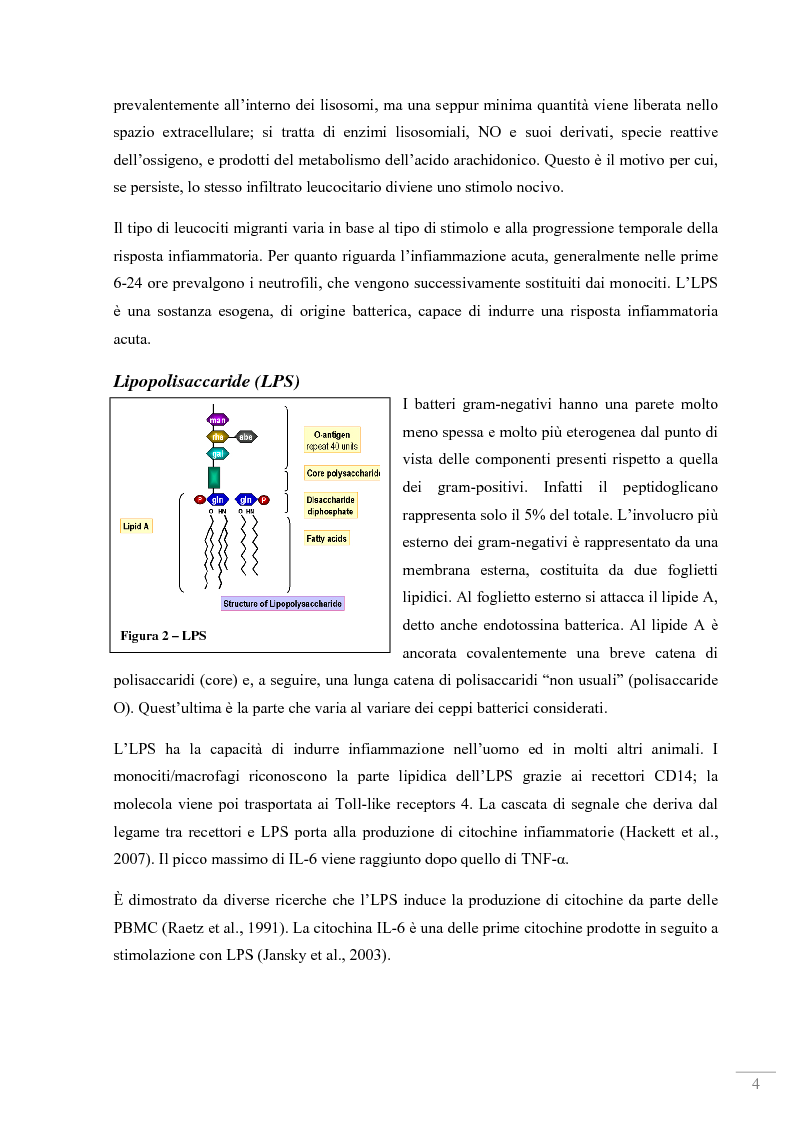Anteprima della tesi: Studio dell'attività antinfiammatoria di estratti di propoli in un modello sperimentale in vitro con PBMC, Pagina 2
