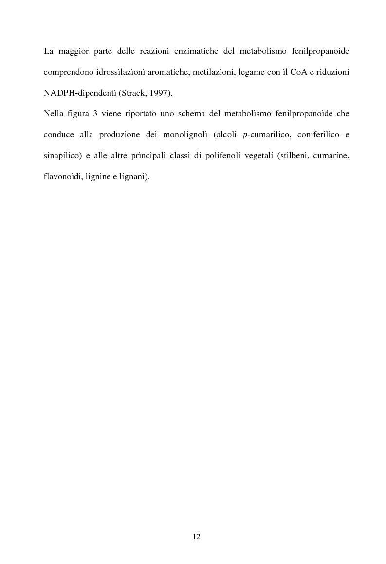 Anteprima della tesi: Piante micorrizate di carciofo: fenoli totali e attività antiossidante nei capolini, Pagina 10