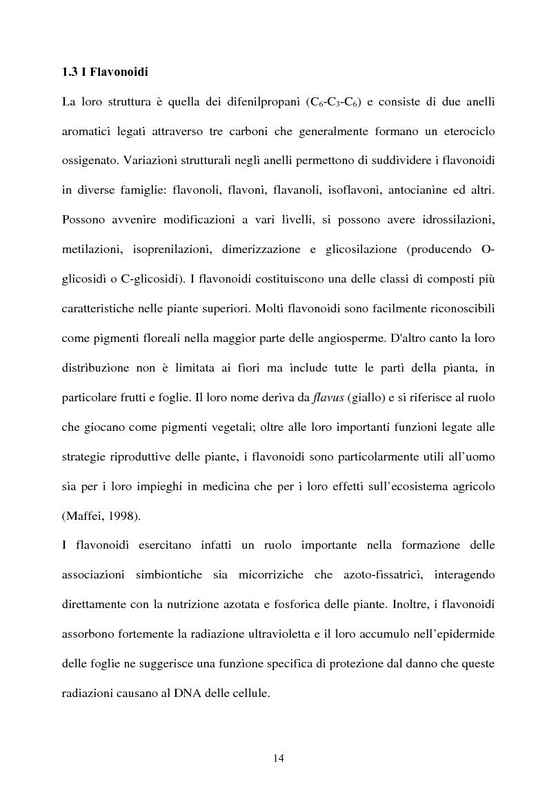 Anteprima della tesi: Piante micorrizate di carciofo: fenoli totali e attività antiossidante nei capolini, Pagina 12