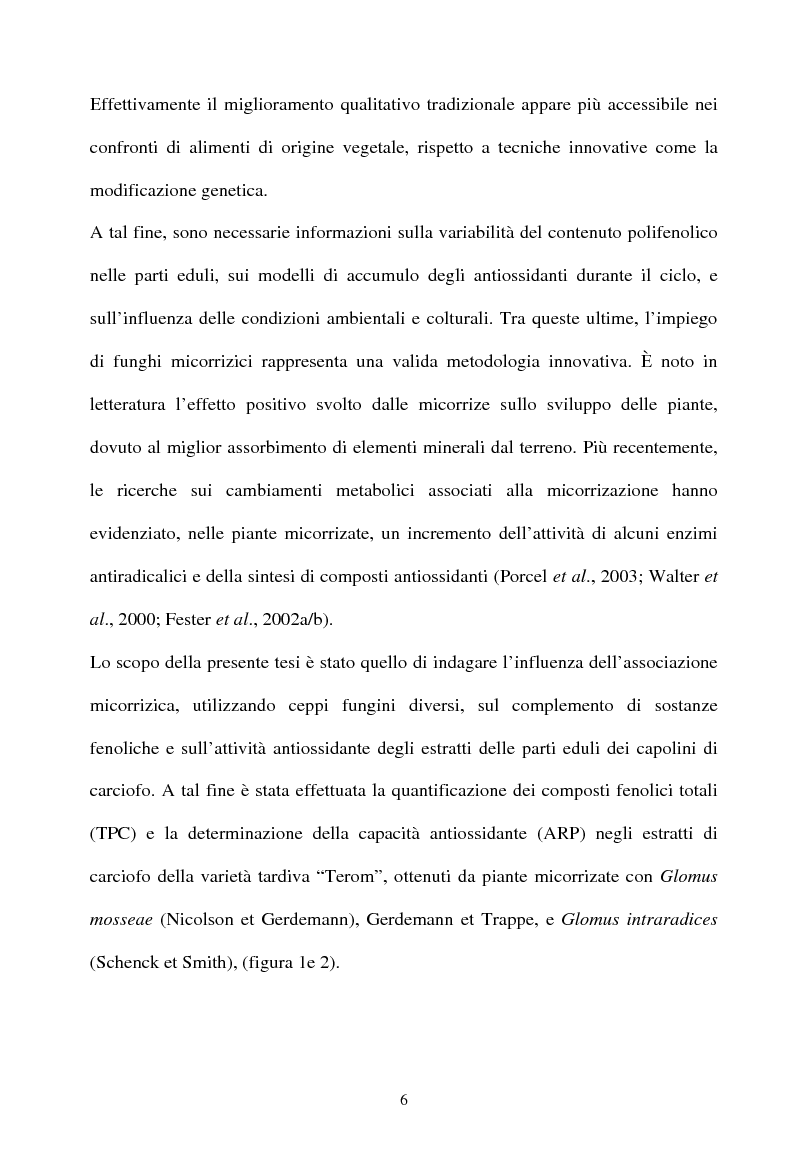 Anteprima della tesi: Piante micorrizate di carciofo: fenoli totali e attività antiossidante nei capolini, Pagina 4