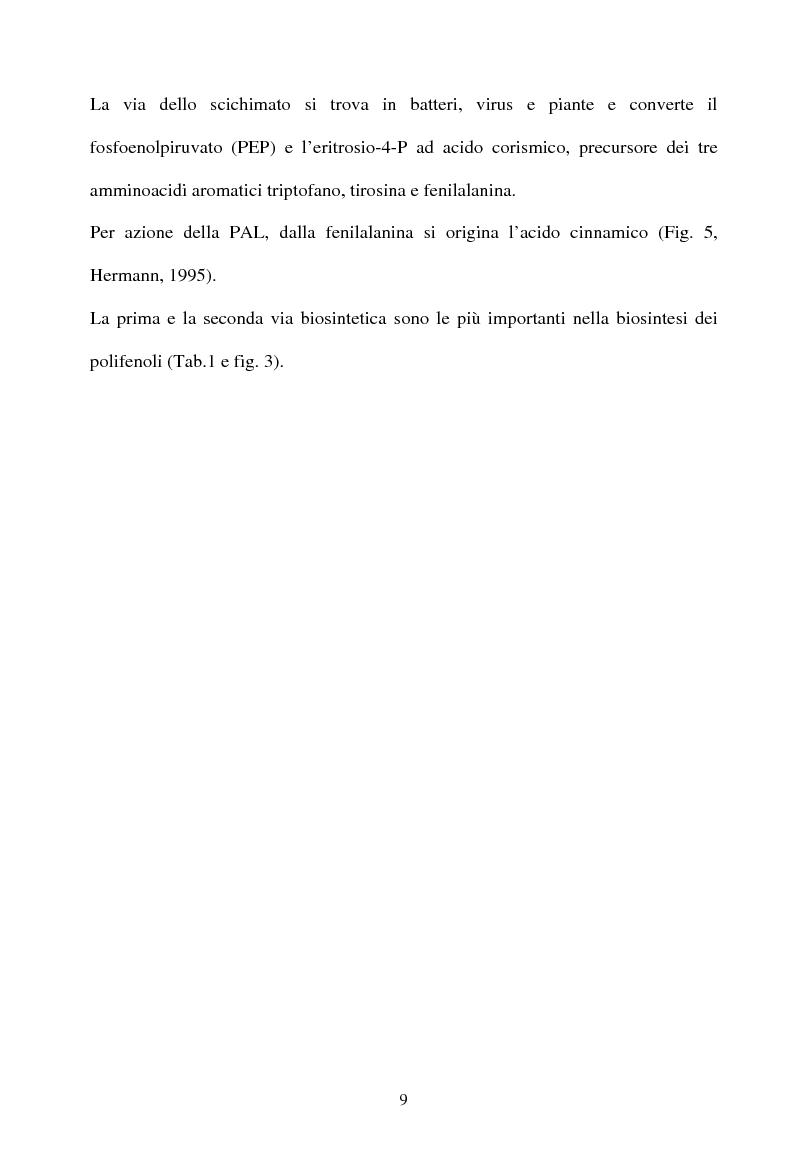 Anteprima della tesi: Piante micorrizate di carciofo: fenoli totali e attività antiossidante nei capolini, Pagina 7