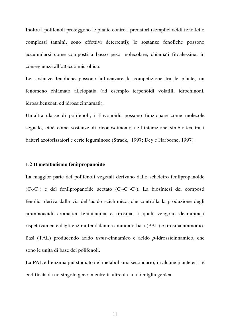Anteprima della tesi: Piante micorrizate di carciofo: fenoli totali e attività antiossidante nei capolini, Pagina 9