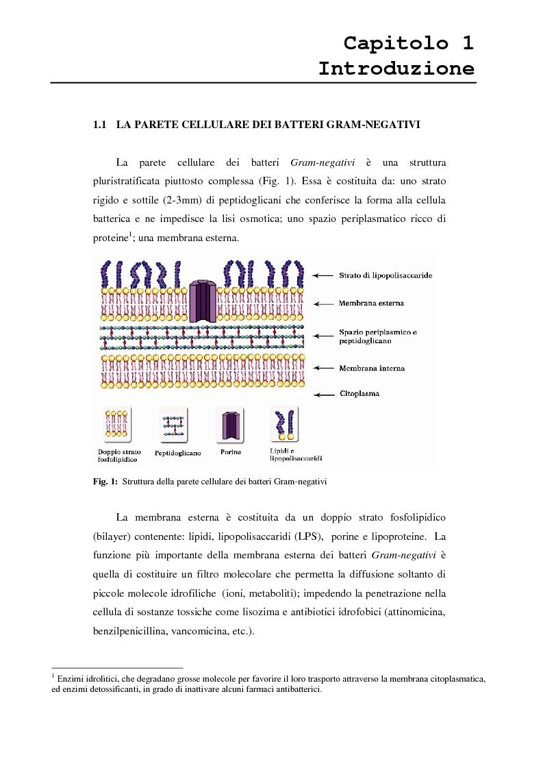 Anteprima della tesi: Proteina P2 da Haemophilus influenzae - Sintesi, caratterizzazione strutturale e attività biologica dei loop superficiali, Pagina 3