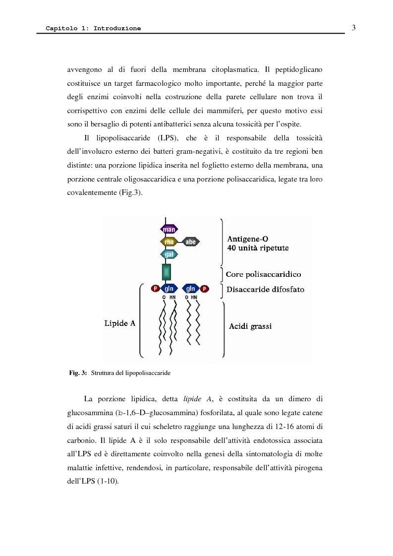 Anteprima della tesi: Proteina P2 da Haemophilus influenzae - Sintesi, caratterizzazione strutturale e attività biologica dei loop superficiali, Pagina 5