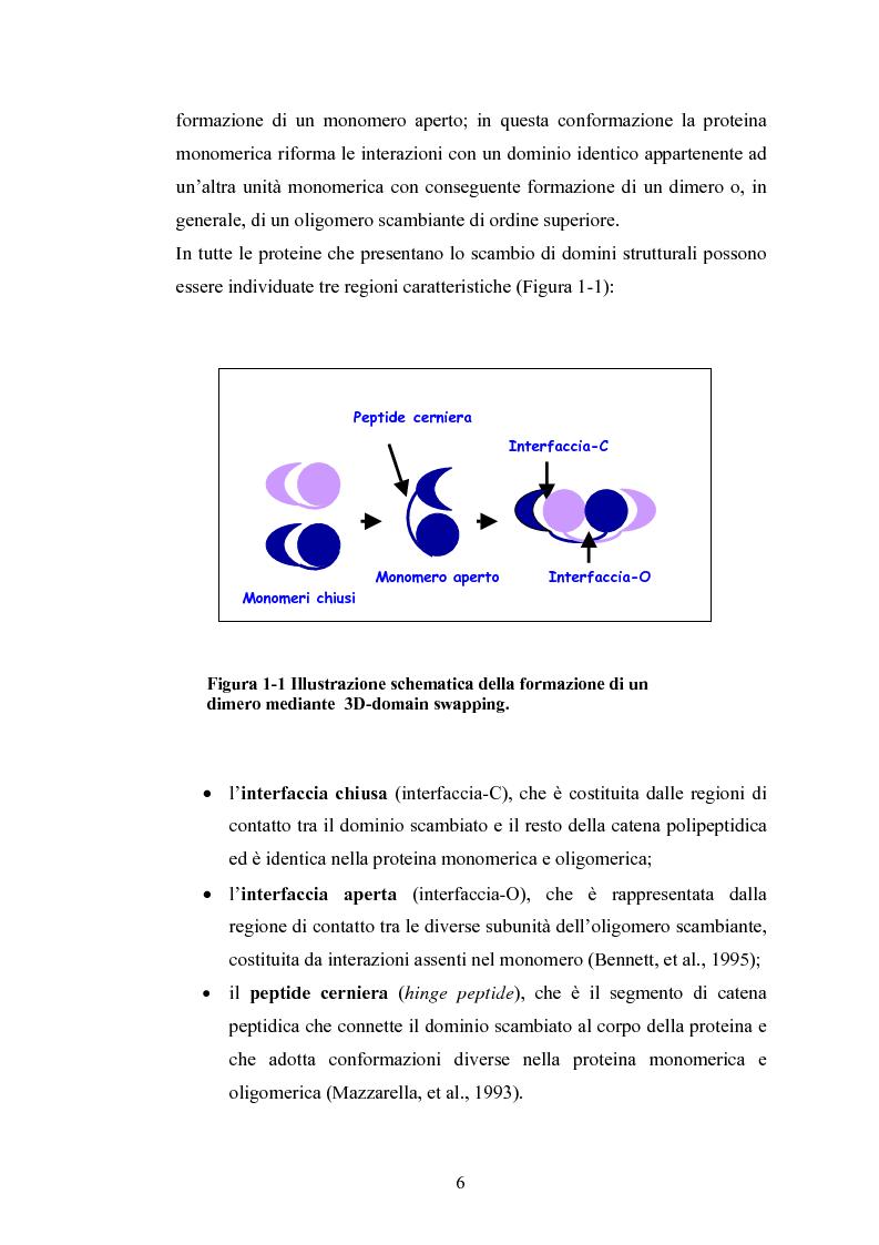 Anteprima della tesi: Ruolo dei peptidi cerniera nella formazione di dimeri non-covalenti della ribonucleasi bovina pancreatica mediante scambio di domini strutturali, Pagina 3