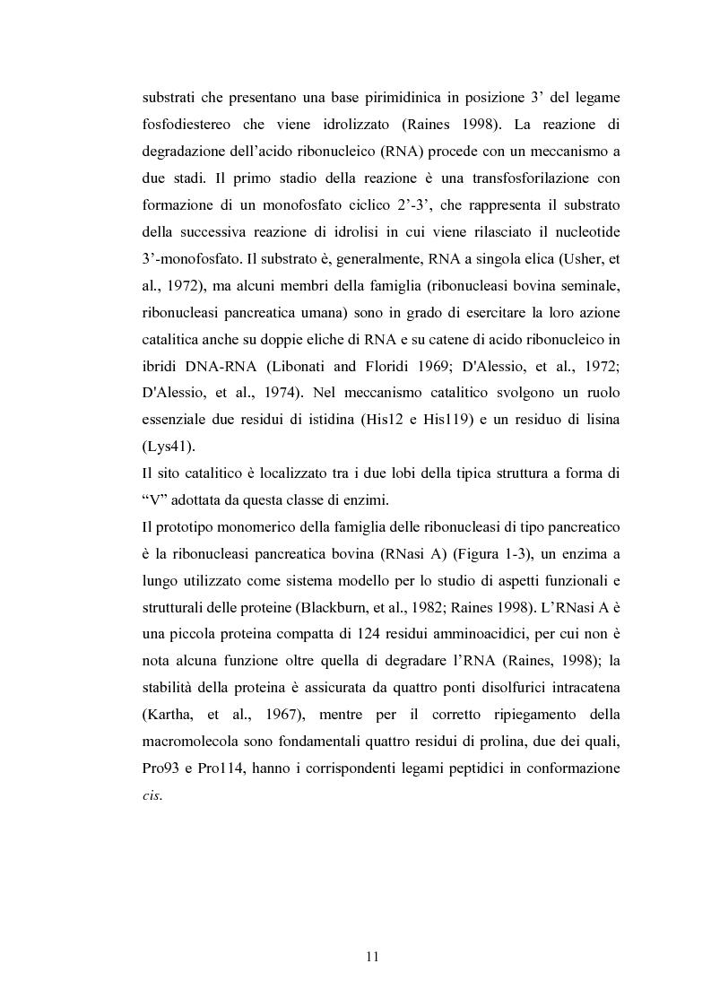Anteprima della tesi: Ruolo dei peptidi cerniera nella formazione di dimeri non-covalenti della ribonucleasi bovina pancreatica mediante scambio di domini strutturali, Pagina 8