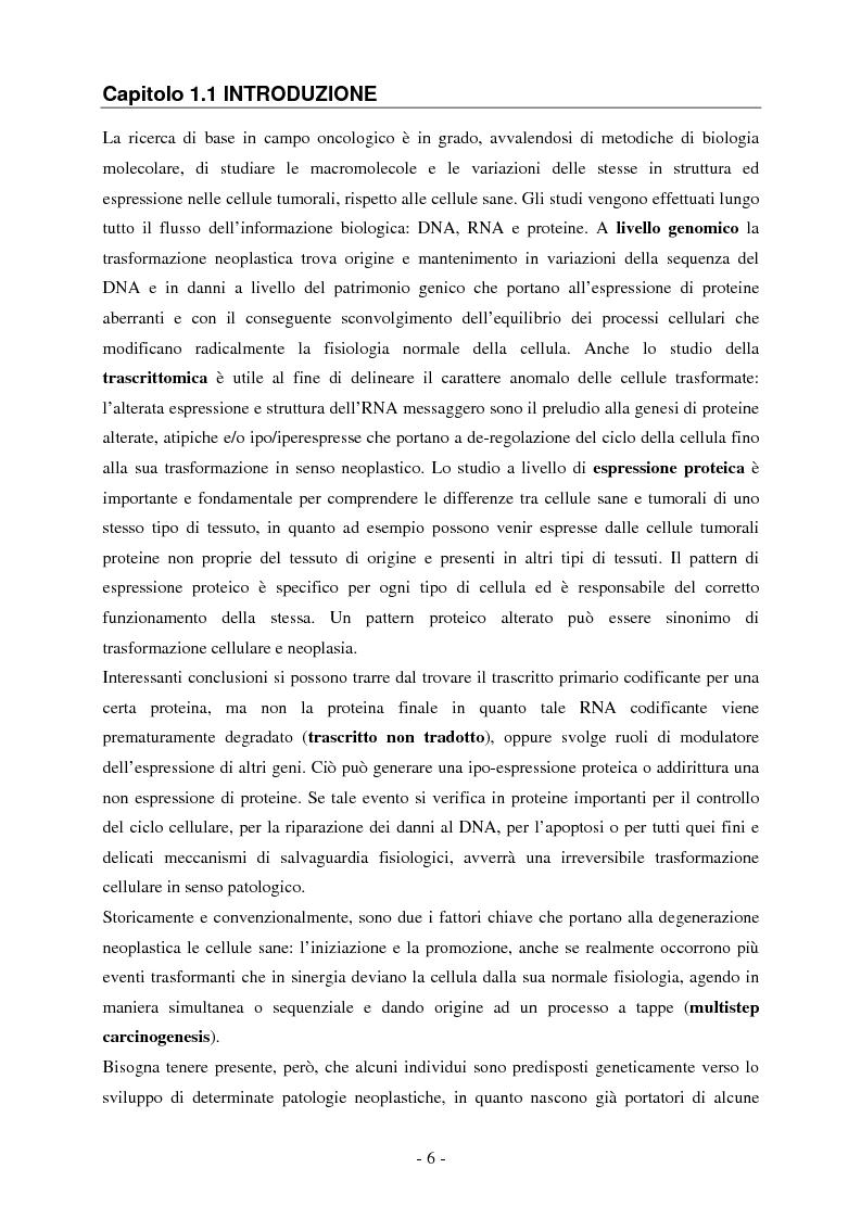 Anteprima della tesi: Studio dell'espressione di EEF1A e delle sue isoforme in linee cellulari tumorali umane, Pagina 1