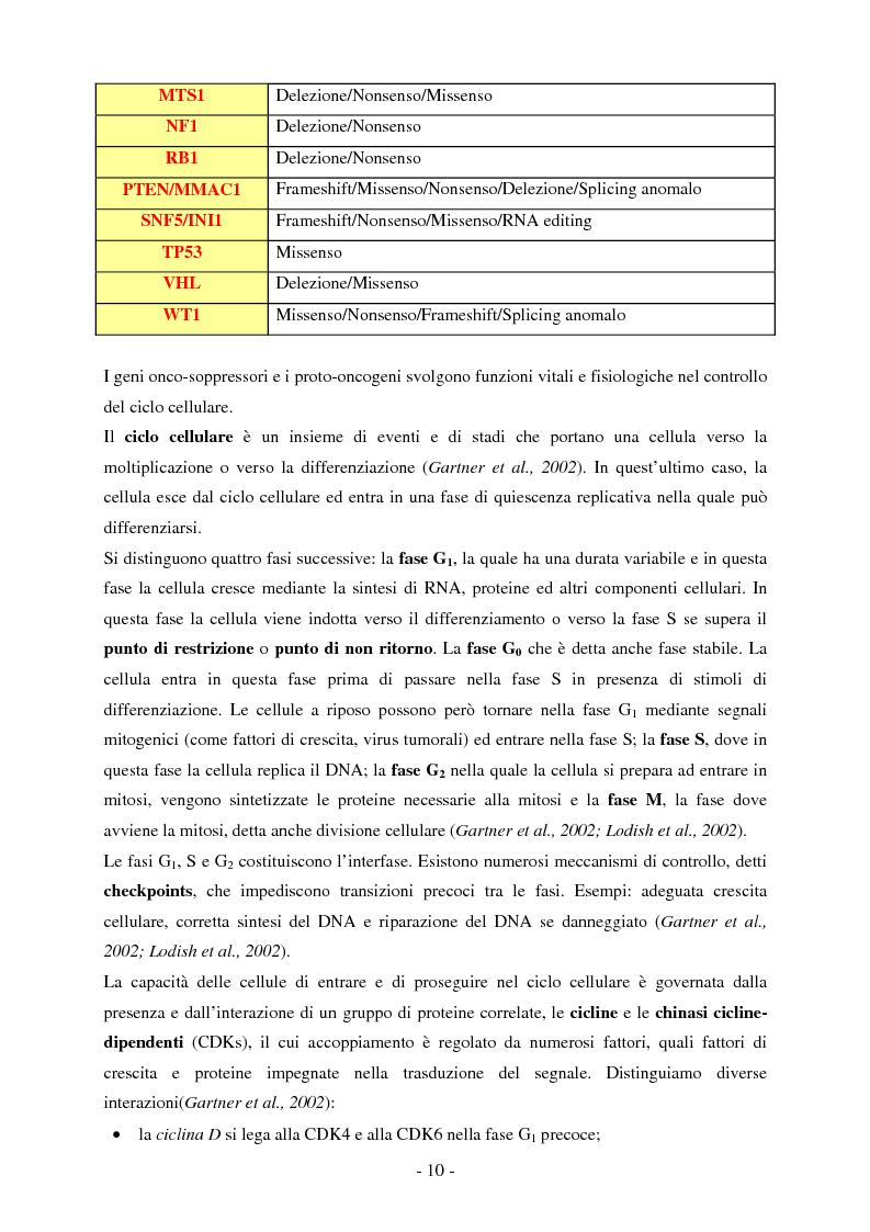 Anteprima della tesi: Studio dell'espressione di EEF1A e delle sue isoforme in linee cellulari tumorali umane, Pagina 5