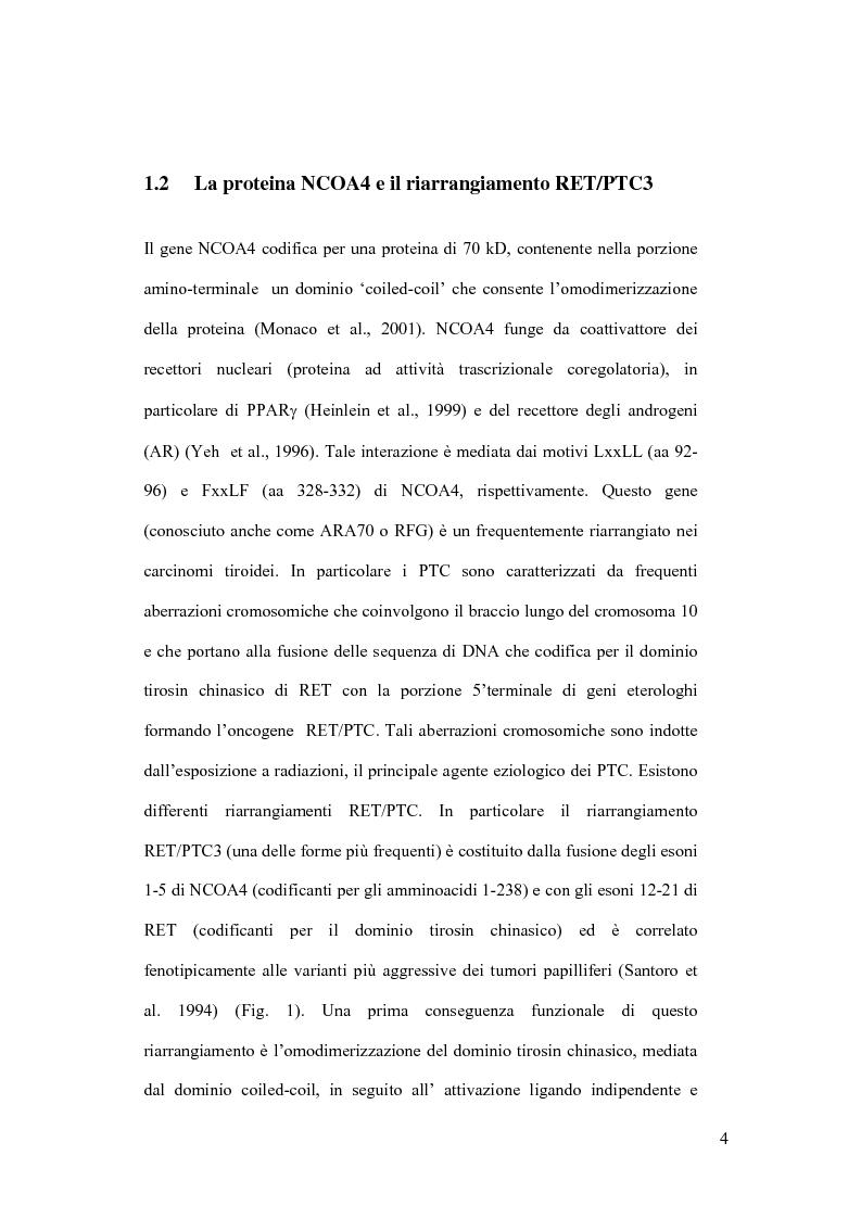 Anteprima della tesi: L'espressione regolata della proteina NCOA4 nel sistema T_REX e gli effetti sulla crescita cellulare, Pagina 4