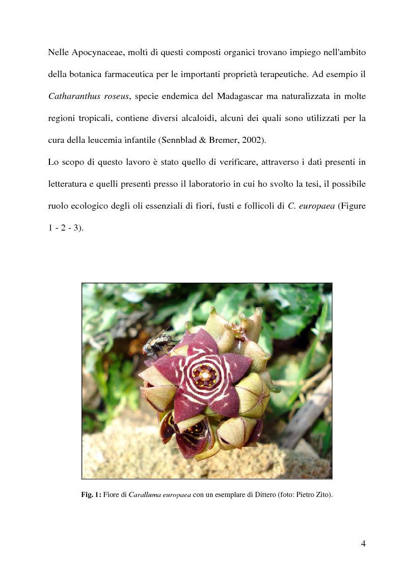 thesis on catharanthus roseus