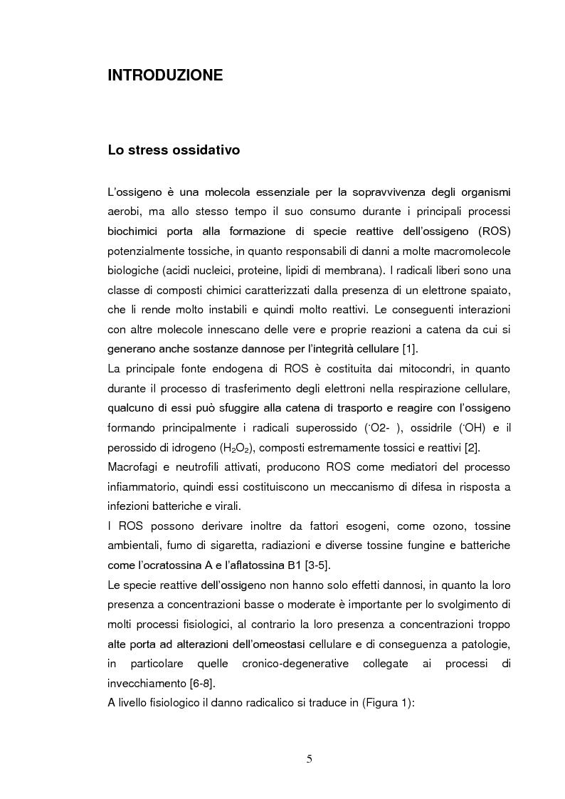 Anteprima della tesi: Effetti su proteasomi e proprietà antiossidanti di un prodotto di ossidazione dell'EGCG, Pagina 2