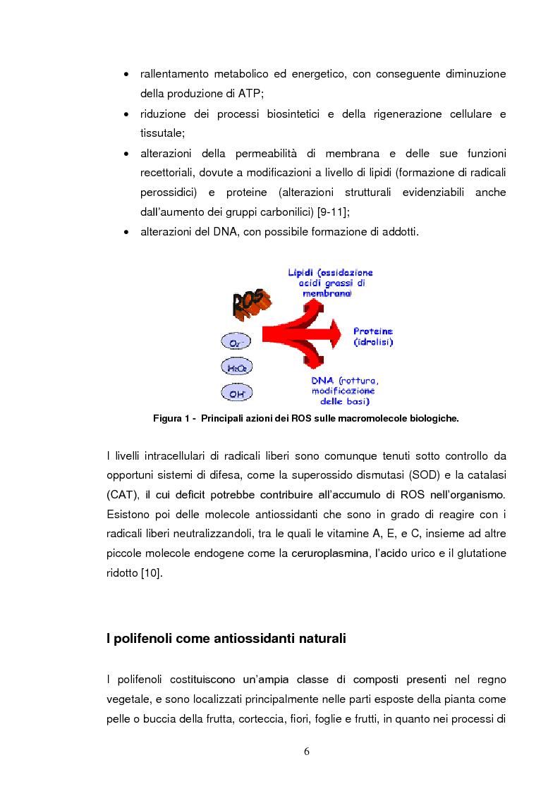 Anteprima della tesi: Effetti su proteasomi e proprietà antiossidanti di un prodotto di ossidazione dell'EGCG, Pagina 3
