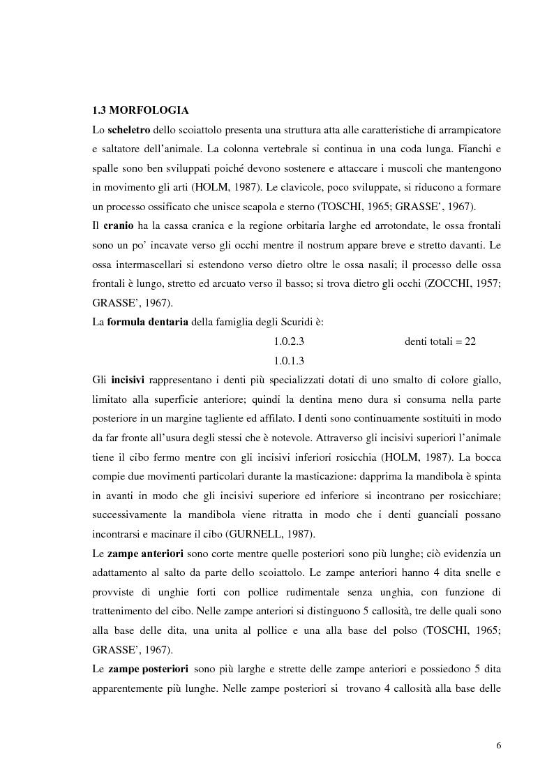 Anteprima della tesi: Nuovi dati sul comportamento di Sciurus vulgaris merdionalis in Calabria, Pagina 6