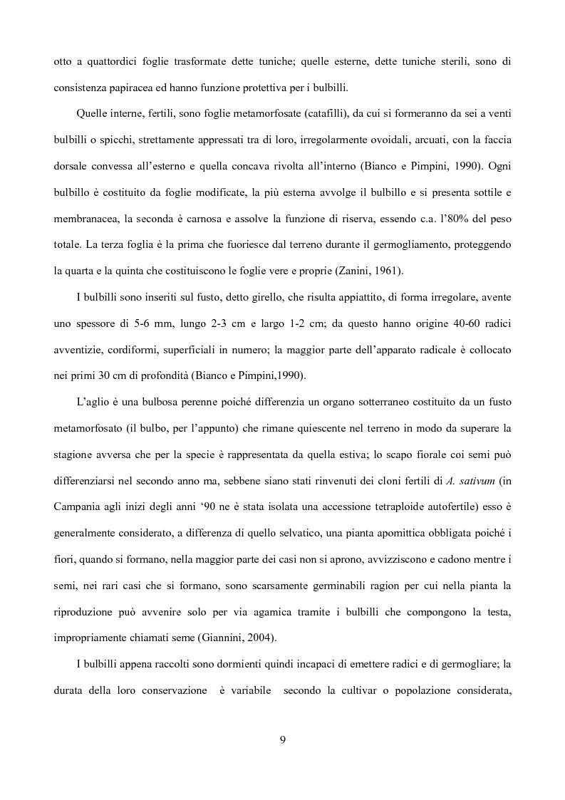 Anteprima della tesi: Caratterizzazione di tipi di aglio (Allium sativum L.) diffusi in Sicilia, Pagina 6