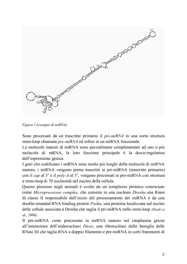 Anteprima della tesi: Profilo di espressione di microRNA in linee cellulari di osteosarcoma, Pagina 2