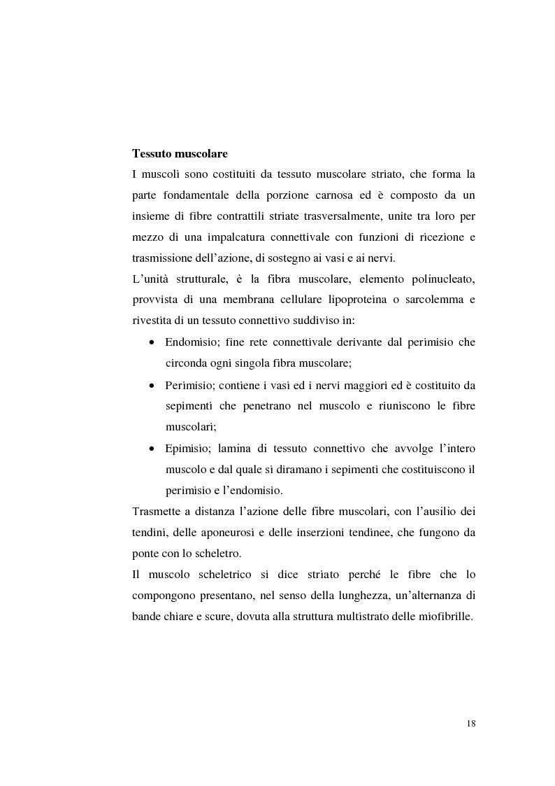 Anteprima della tesi: Sostenibilità zootecnica in ordinamenti produttivi del Mezzogiorno continentale: Podolica e Marchigiana, Pagina 13