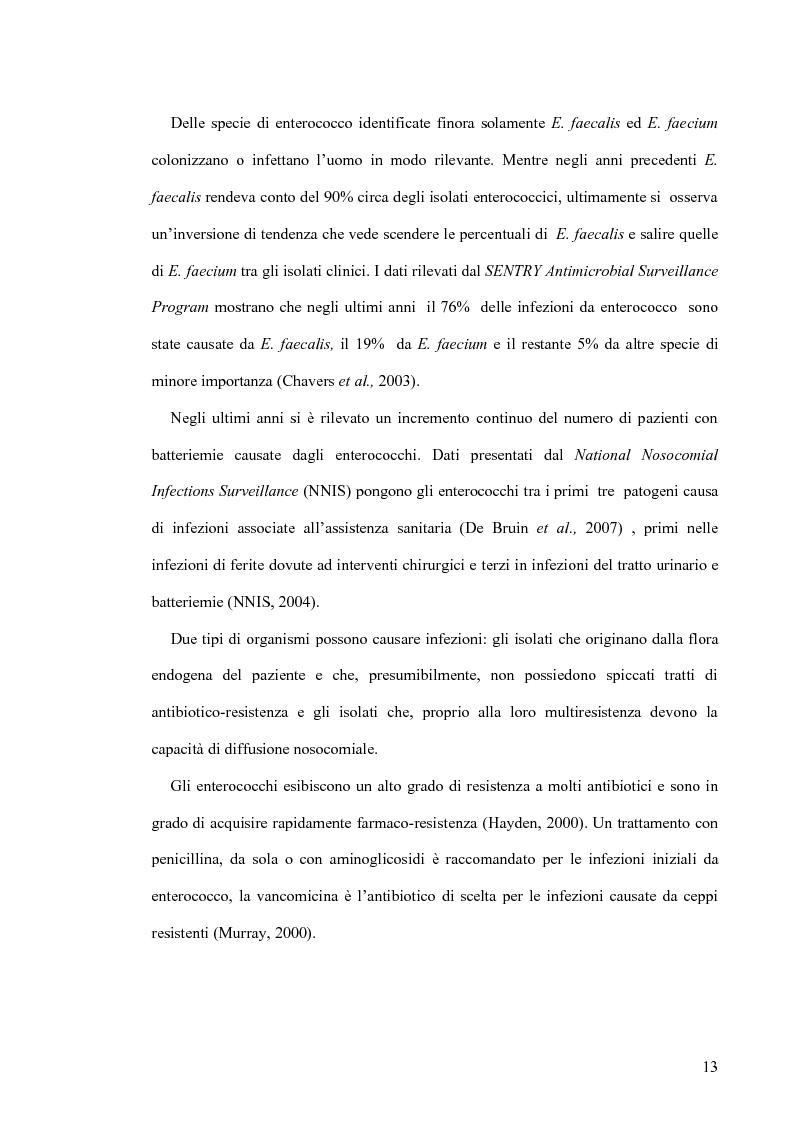 Anteprima della tesi: Identificazione e tipizzazione molecolare di enterococchi vancomicina resistenti (VRE) nell'Azienda Ospedaliera San Camillo-Forlanini, Pagina 11