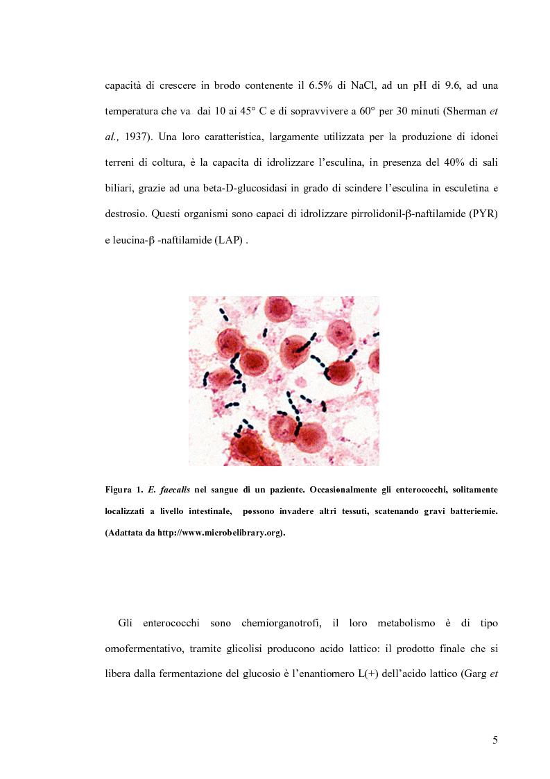 Anteprima della tesi: Identificazione e tipizzazione molecolare di enterococchi vancomicina resistenti (VRE) nell'Azienda Ospedaliera San Camillo-Forlanini, Pagina 3