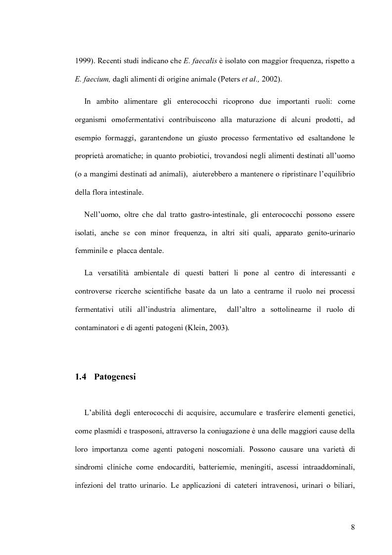 Anteprima della tesi: Identificazione e tipizzazione molecolare di enterococchi vancomicina resistenti (VRE) nell'Azienda Ospedaliera San Camillo-Forlanini, Pagina 6