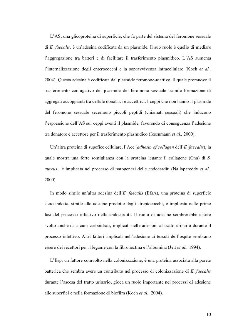 Anteprima della tesi: Identificazione e tipizzazione molecolare di enterococchi vancomicina resistenti (VRE) nell'Azienda Ospedaliera San Camillo-Forlanini, Pagina 8