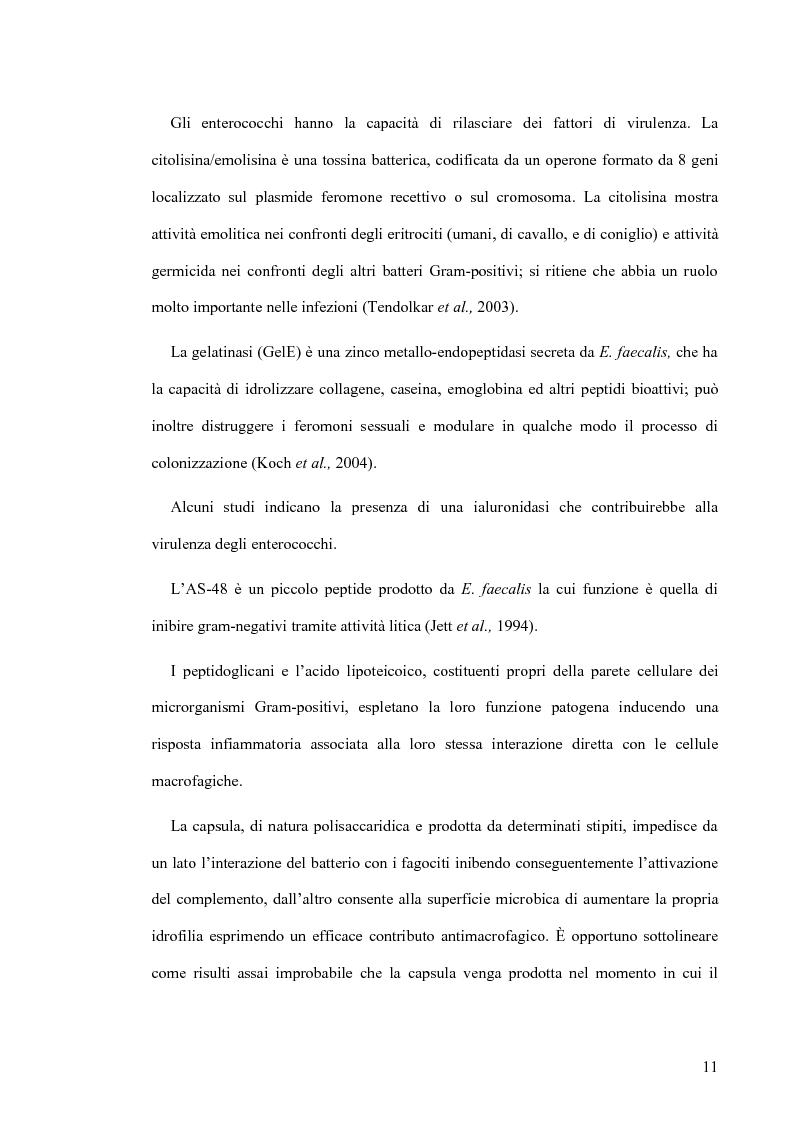 Anteprima della tesi: Identificazione e tipizzazione molecolare di enterococchi vancomicina resistenti (VRE) nell'Azienda Ospedaliera San Camillo-Forlanini, Pagina 9