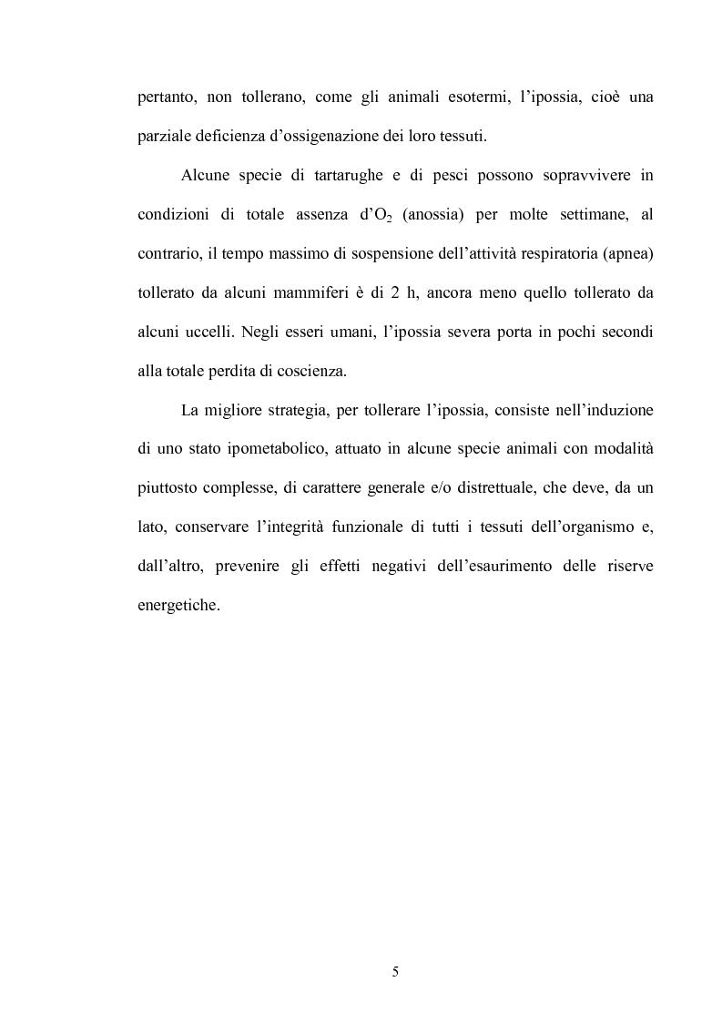 Anteprima della tesi: Le risposte adattative all'ipossia: dagli animali marini all'uomo, Pagina 5