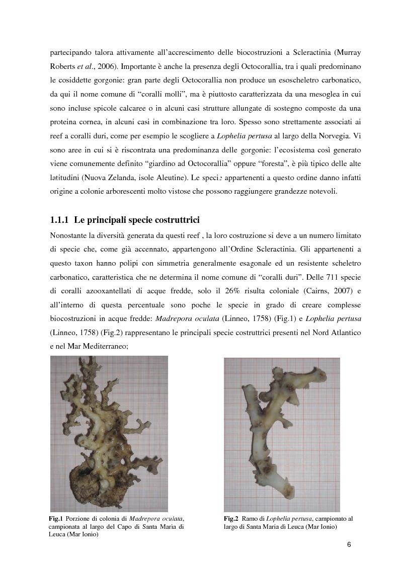 Anteprima della tesi: Habitat Mapping e Visual Census nell'area a coralli profondi di Santa Maria di Leuca (Mar Ionio Settentrionale), Pagina 3