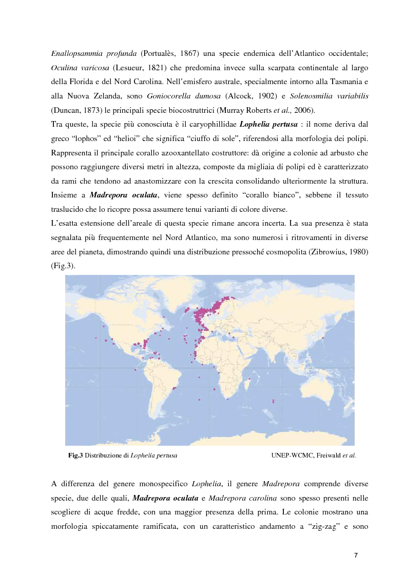 Anteprima della tesi: Habitat Mapping e Visual Census nell'area a coralli profondi di Santa Maria di Leuca (Mar Ionio Settentrionale), Pagina 4