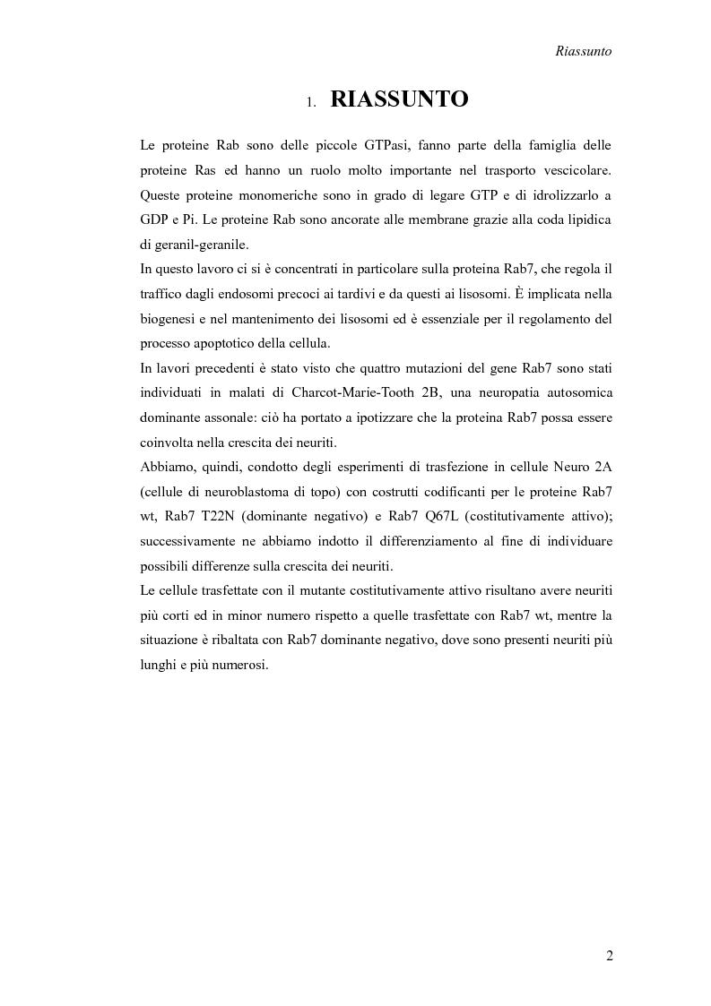 Anteprima della tesi: Studio del ruolo della proteina Rab7 sulla crescita dei neuriti, Pagina 1