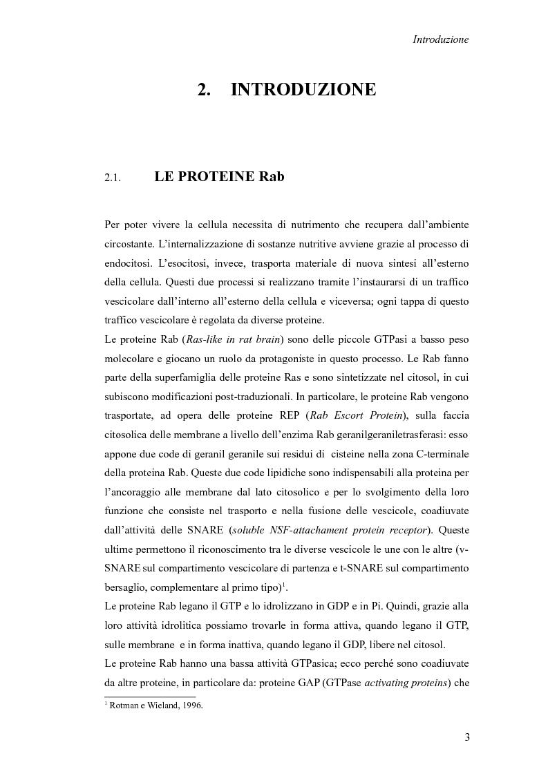 Anteprima della tesi: Studio del ruolo della proteina Rab7 sulla crescita dei neuriti, Pagina 2