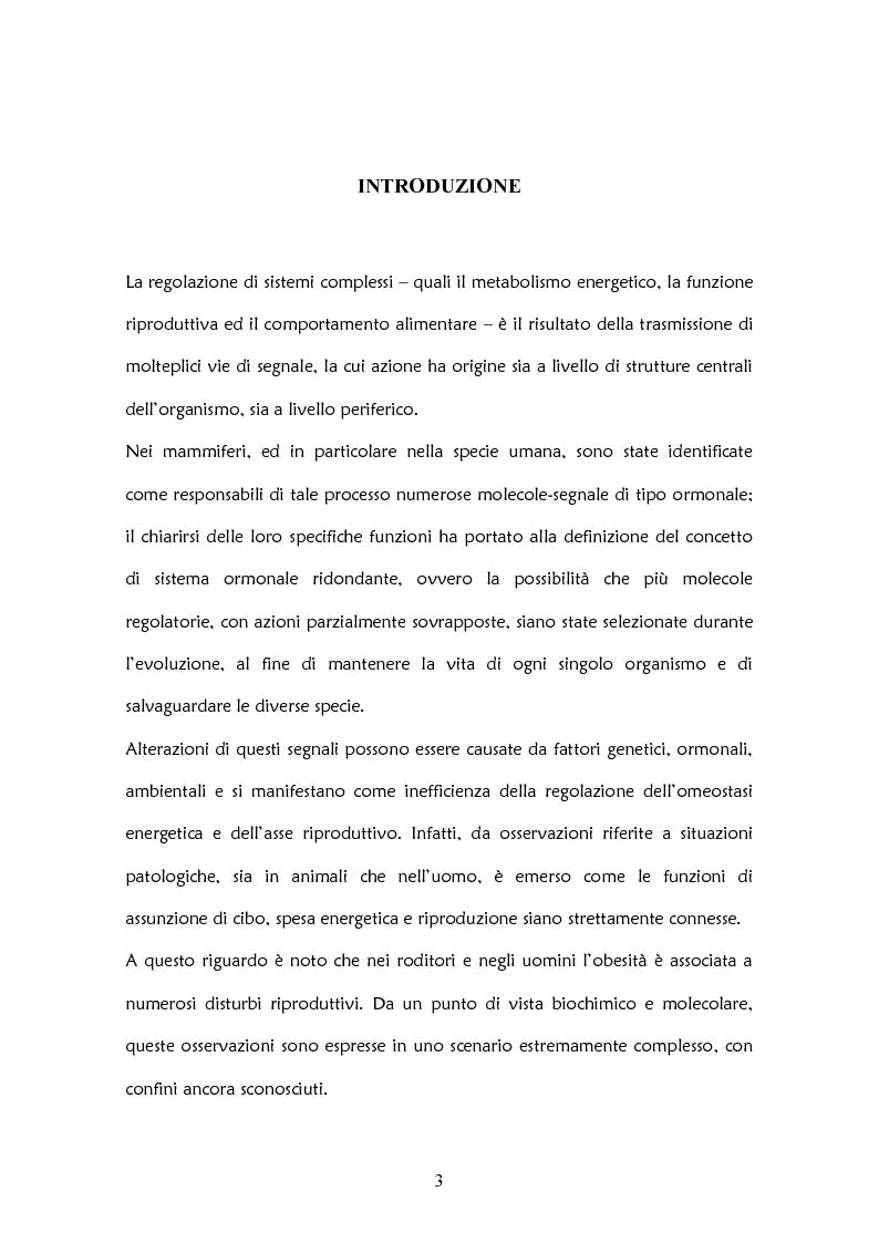 Anteprima della tesi: Il ruolo delle adipochine nel tessuto adiposo, Pagina 1