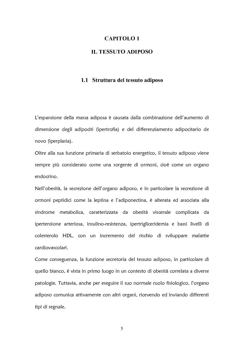 Anteprima della tesi: Il ruolo delle adipochine nel tessuto adiposo, Pagina 3