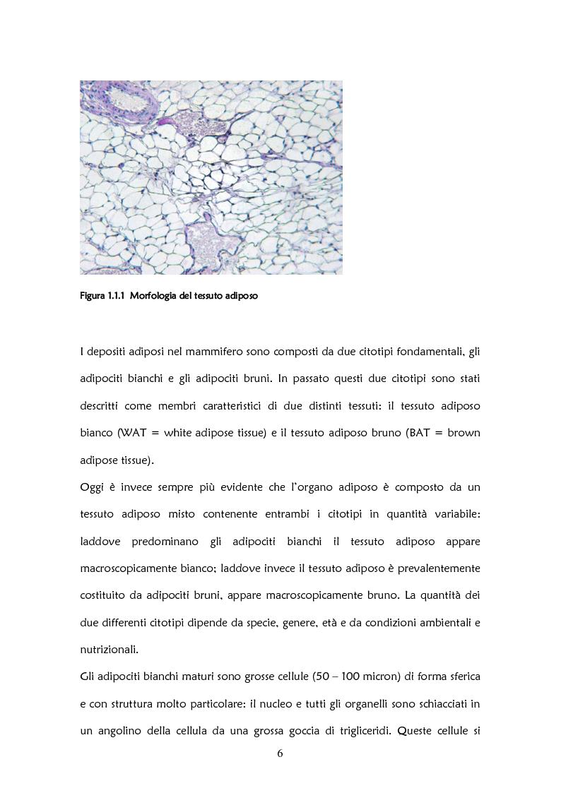 Anteprima della tesi: Il ruolo delle adipochine nel tessuto adiposo, Pagina 4