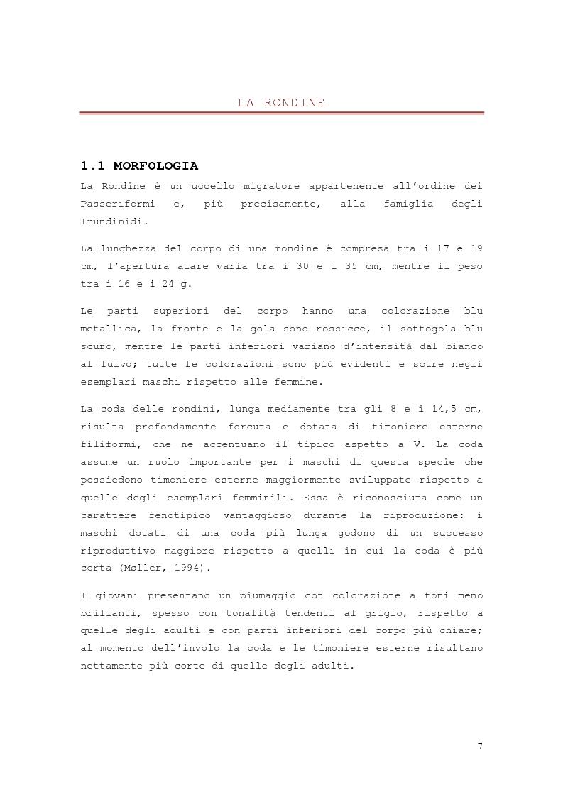 Anteprima della tesi: Effetto della distribuzione delle colture erbacee nell'intorno dei siti di nidificazione della rondine, Hirundo rustica, Pagina 5