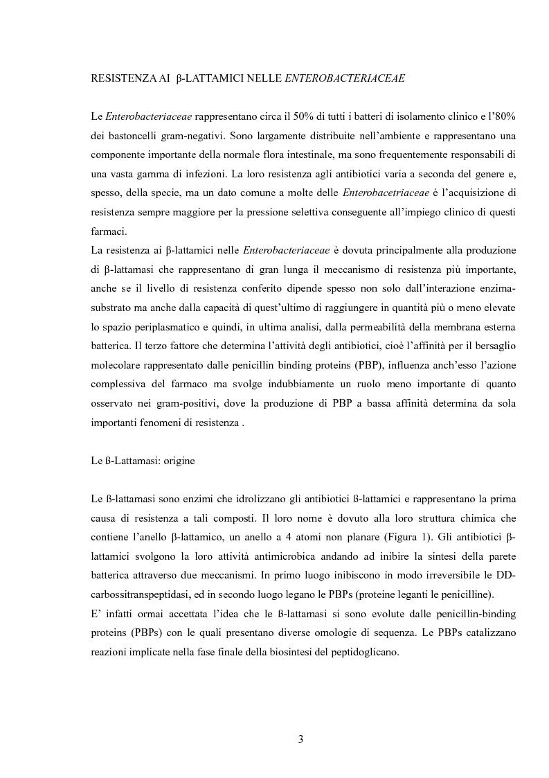 Anteprima della tesi: Le enterobacteriaceae produttrici di Esbl: studio sulla prevalenza di Esbl su isolati clinici nella U. O. di Medicina di laboratorio P. O. San Salvatore di L'Aquila, Pagina 2