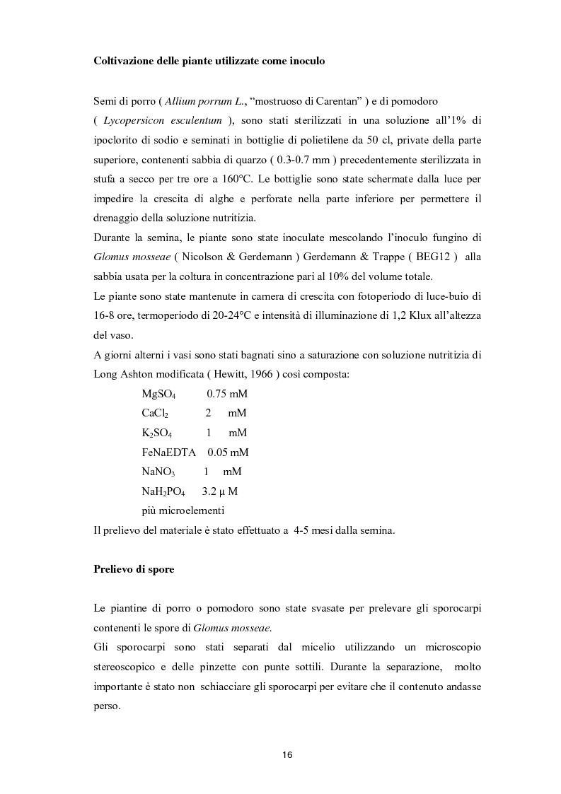 Anteprima della tesi: Indagini sulla micorrizazione, in condizioni axeniche, di Plantule di Lycopersicon Esculentum con Glomus Mosseae, Pagina 1