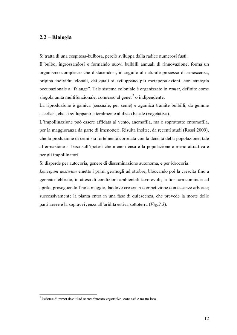 Anteprima della tesi: Dinamica di accrescimento di Leucojum aestivum L. in alcune sorgenti di terrazzo a Pavia, Pagina 12